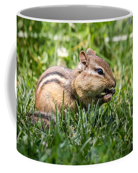 Chipmunk Coffee Mug featuring the photograph Nom Nom Nom Chipmunk by Dawna Moore Photography