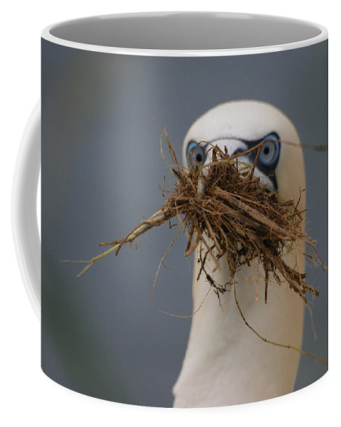Andy Beattie Coffee Mug featuring the photograph Northern Gannet by Andy Beattie Photography