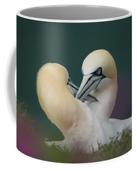 Andy Beattie Coffee Mug featuring the photograph Northern Gannets by Andy Beattie Photography