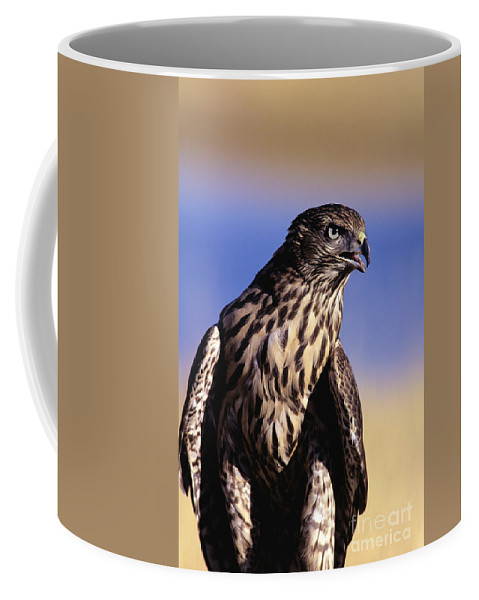 Accipiter Coffee Mug featuring the photograph Northern Goshawk by John Hyde - Printscapes