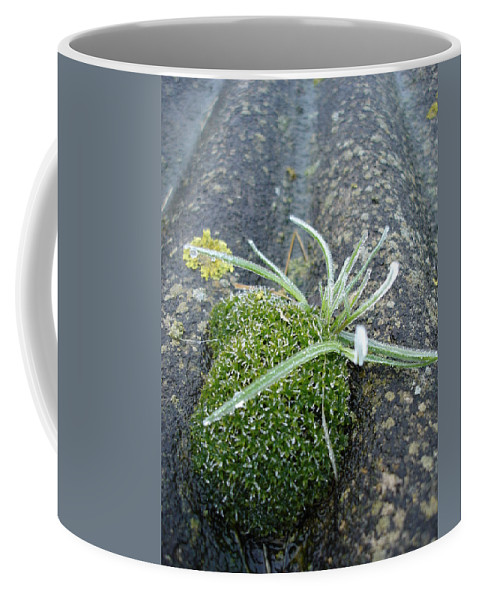 Green Coffee Mug featuring the photograph Not Quite A Roof Garden by Susan Baker