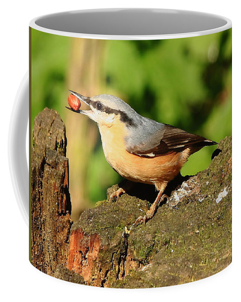 Bird Coffee Mug featuring the photograph Nuthatch by Jeff Townsend