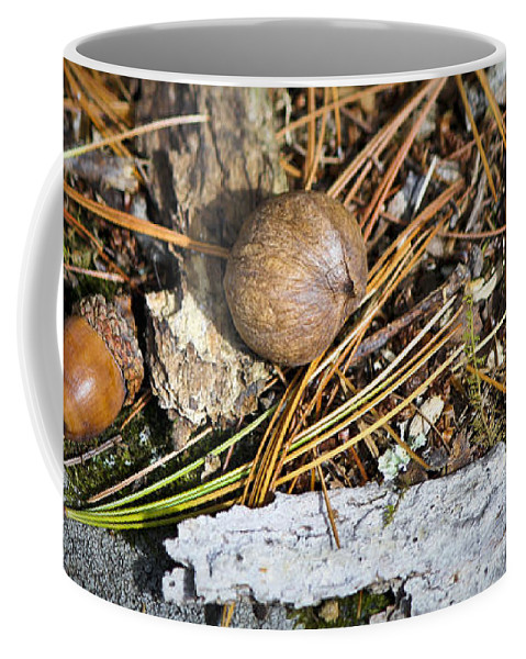 Nuts Coffee Mug featuring the photograph Nuts by Teresa Mucha