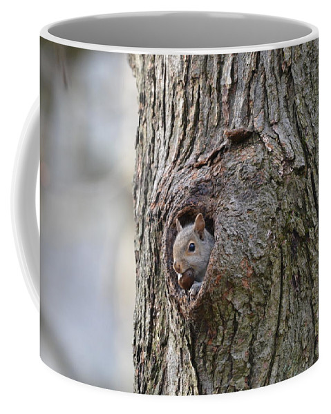 Squirrel Coffee Mug featuring the photograph Nutty Squirrel Surprise by Shelley Smith