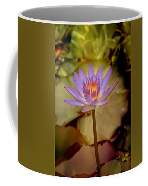 Water Lily Coffee Mug featuring the photograph Nymphaea by Susan Rissi Tregoning