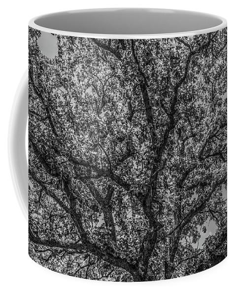 Oak Coffee Mug featuring the photograph Oak Abstract by Peter Bouman