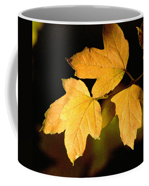 Trees Coffee Mug featuring the photograph Oak Leaf Trio by Norman Andrus