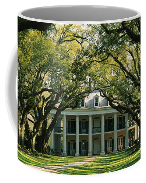 Photography Coffee Mug featuring the photograph Oak Trees In Front Of A Mansion, Oak by Panoramic Images