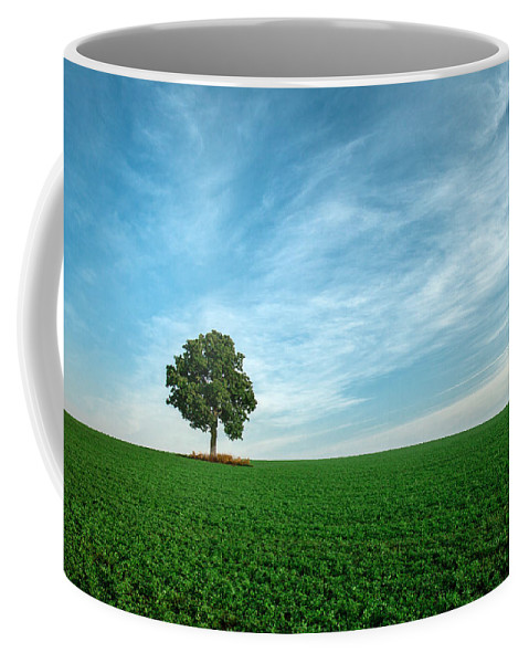 Tree Coffee Mug featuring the photograph Oasis by Todd Klassy