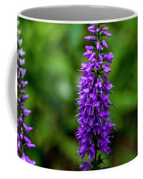 Beautiful Blooms Coffee Mug featuring the photograph Obedient Plant by Bob Corson