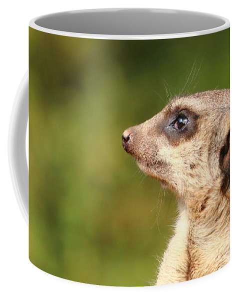 Meerkat Coffee Mug featuring the photograph Observation by Heike Hultsch