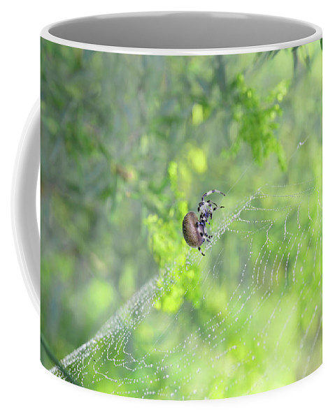 Spider Coffee Mug featuring the photograph Oh The Webs We Weave by Barbara Treaster