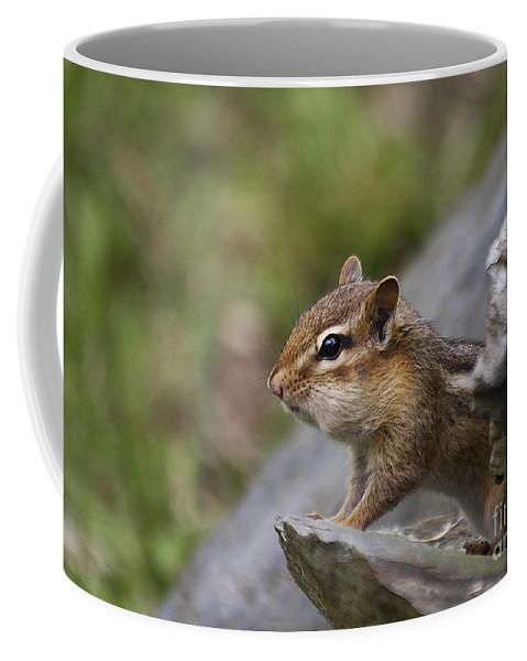 Chipmunk Coffee Mug featuring the photograph Ok So My Cheeks Are Full by Deborah Benoit