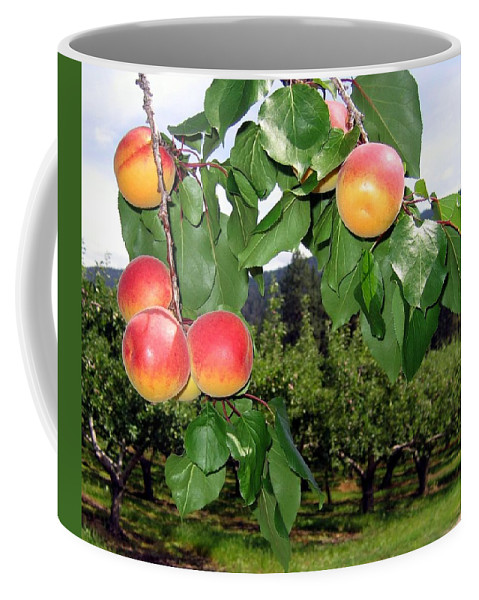Apricots Coffee Mug featuring the digital art Okanagan Apricots by Will Borden