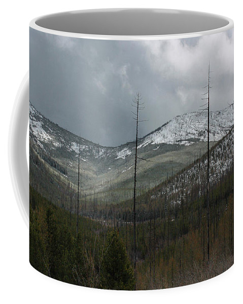 Coffee Mug featuring the photograph Old Burn In Spring by Jacki Smoldon