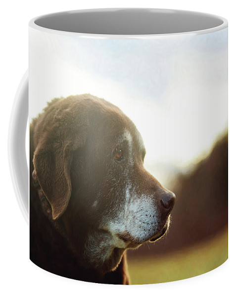 Animals Coffee Mug featuring the photograph Old Friend by Sue Collura