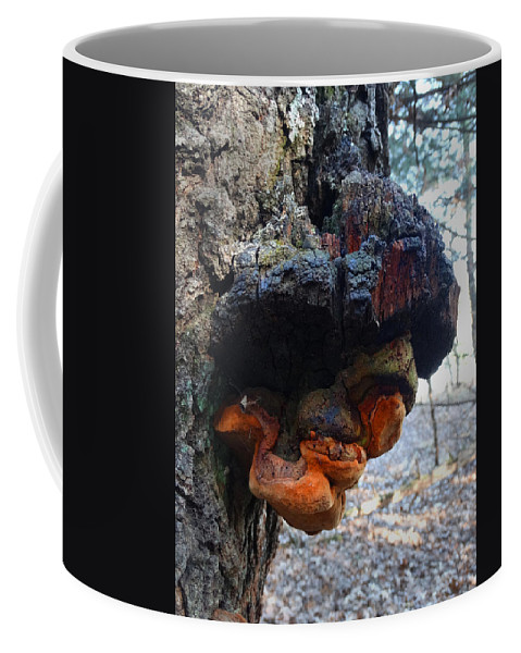 Walking In The Woods Coffee Mug featuring the photograph Old Man In A Tree by David T Wilkinson