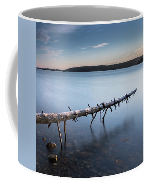 Acadia Coffee Mug featuring the photograph Old Spruce by Arti Panchal