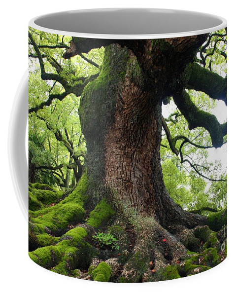 Tree Coffee Mug featuring the photograph Old Tree In Kyoto by Carol Groenen