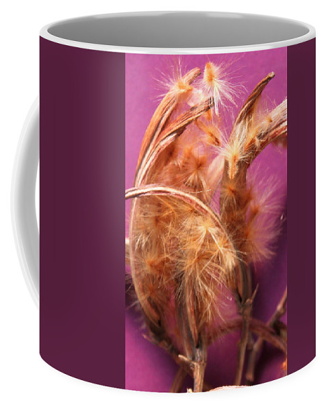 Garden Coffee Mug featuring the photograph Oleander Seed Pods by M Diane Bonaparte