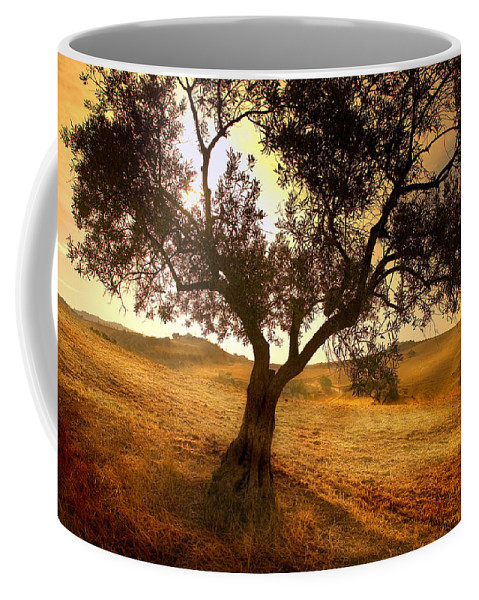 Landscape Coffee Mug featuring the photograph Olive Tree Dawn by Mal Bray