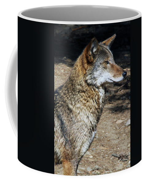 Wolf Coffee Mug featuring the photograph On Alert by Karol Livote
