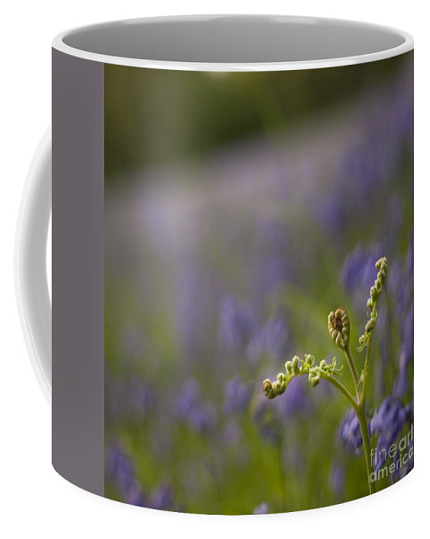 Bluebells Coffee Mug featuring the photograph On The Blue Meadow by Angel Ciesniarska