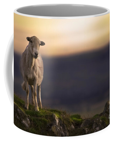 Sheep Coffee Mug featuring the photograph On The Top Of The Hill by Angel Ciesniarska
