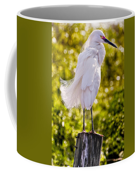 snowy Egret Coffee Mug featuring the photograph On Watch by Christopher Holmes