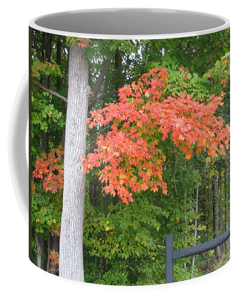 Fall Coffee Mug featuring the photograph Onaway by Kelly Mezzapelle