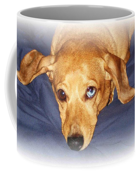 Dachshund Coffee Mug featuring the photograph One Blue Eye by Nelson Strong