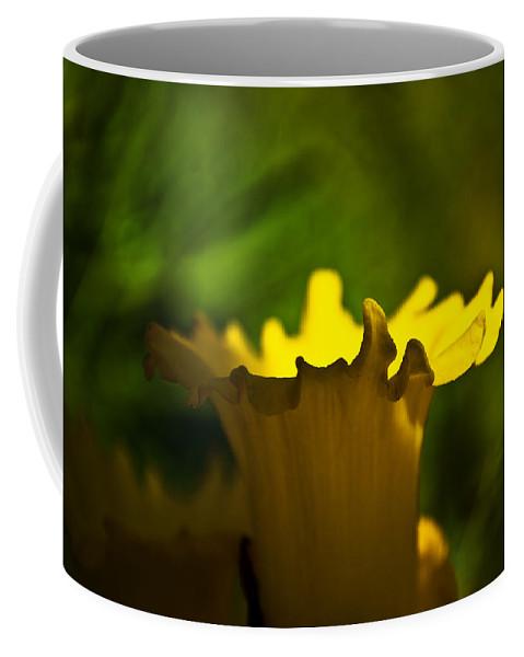 Flower Coffee Mug featuring the photograph One Daffodil by Svetlana Sewell