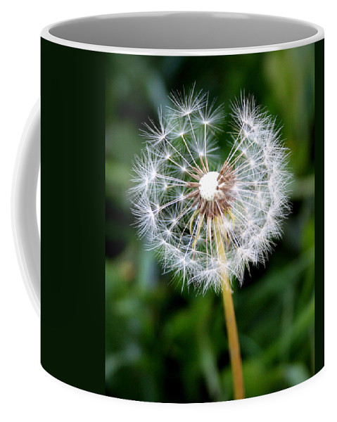 Dandylion Coffee Mug featuring the photograph One Dandy Lion by Chris Brannen