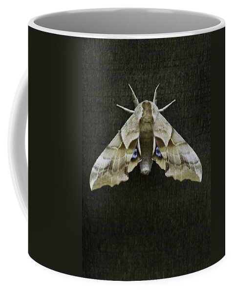 Moth Coffee Mug featuring the photograph One Eyed Sphinx Moth by Herman Robert
