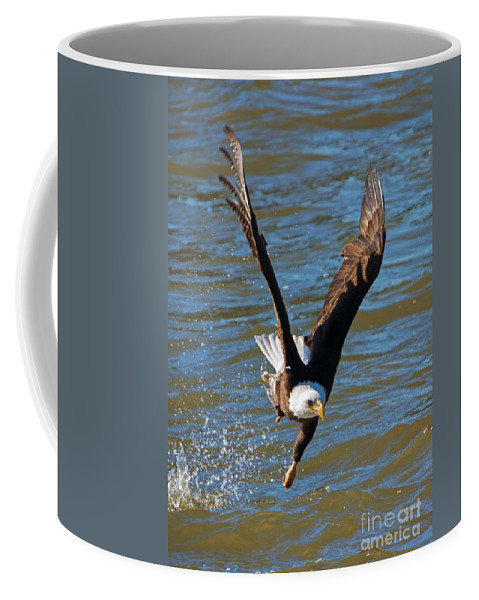 American Bald Eagle Coffee Mug featuring the photograph One Hand Grab by Mike Dawson