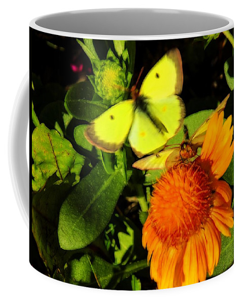 Little Sulpher Butterflies Coffee Mug featuring the photograph One Sulpher In Flight by William Tasker