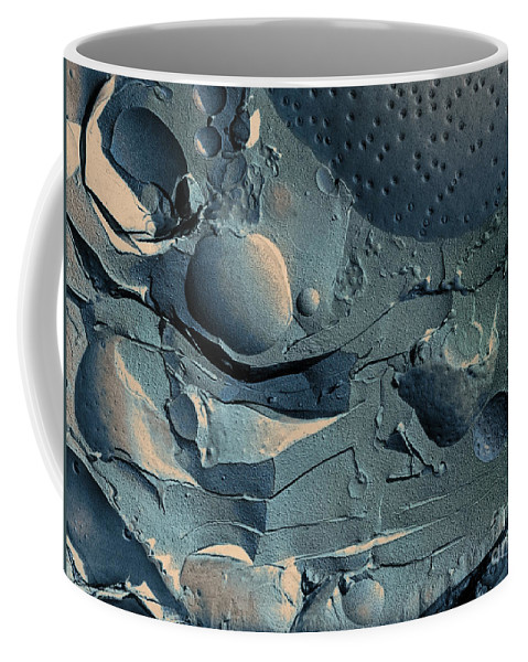 Science Coffee Mug featuring the photograph Onion Root Tip Cell, Freeze Fracture Tem by Omikron