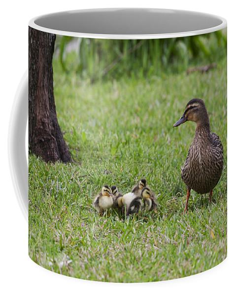 Duck Coffee Mug featuring the photograph Onlooker by Mykel Davis