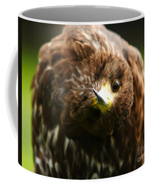 Buzzard Coffee Mug featuring the photograph Oops I Have Gone Mad by Angel Tarantella
