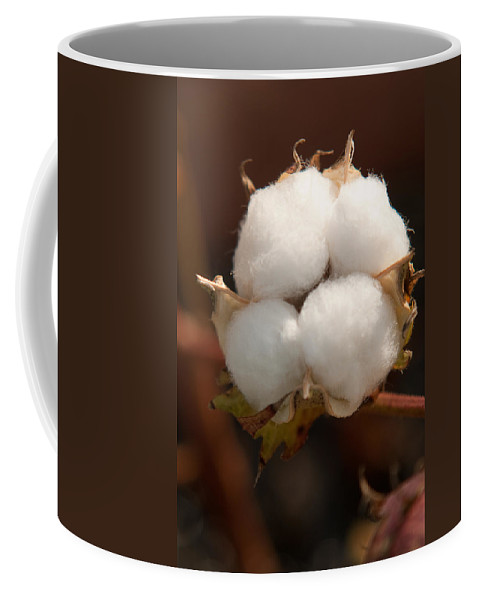 Cotton Coffee Mug featuring the photograph Open Cotton Boll by Douglas Barnett