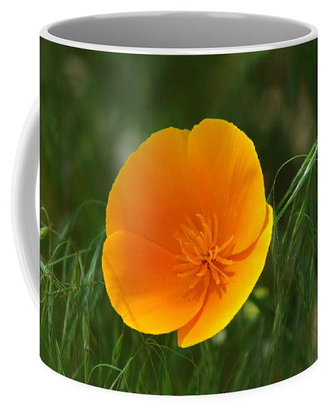 California Poppy Coffee Mug featuring the photograph Open Up To Me by Donna Blackhall