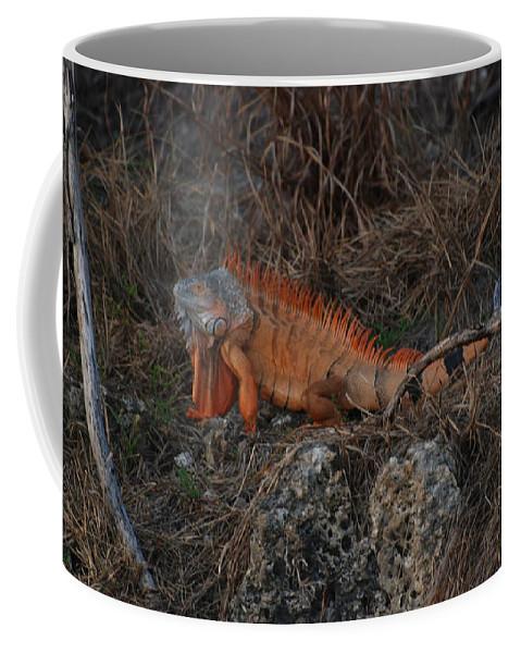 Brush Coffee Mug featuring the photograph Oranage Iguana by Rob Hans