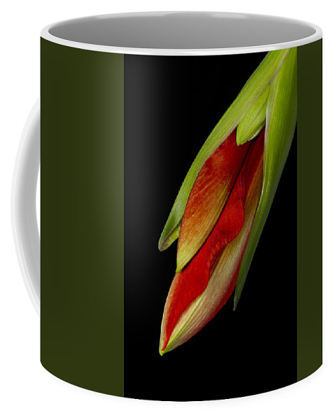 Amaryllis Coffee Mug featuring the photograph Orange Amaryllis Hippeastrum In The Beginning 2-21-10 by James BO Insogna