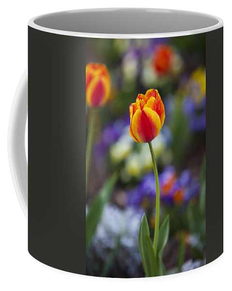 Flower Coffee Mug featuring the photograph Orange And Yellow Tulip by Amy Jackson