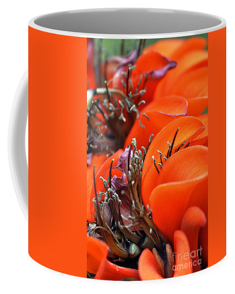 Clay Coffee Mug featuring the photograph Orange by Clayton Bruster