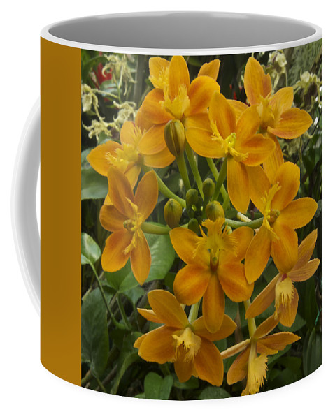 Flower Coffee Mug featuring the photograph Orange Cluster by Michael Peychich