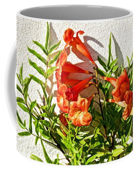 Orange Trumpet Flowers At Pilgrim Place In Claremont Coffee Mug featuring the photograph Orange Trumpet Flowers At Pilgrim Place In Claremont-california by Ruth Hager