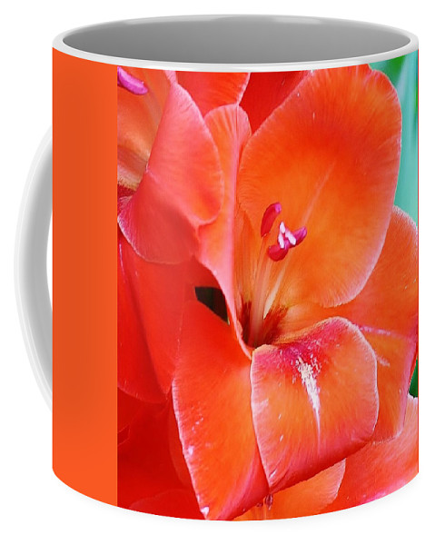 Flora Coffee Mug featuring the photograph Orange Gladiola by Bruce Bley