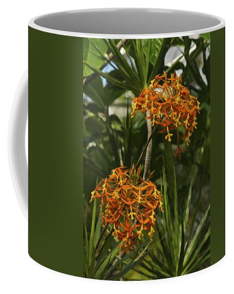 Hawaii Coffee Mug featuring the photograph Orange Globes by Michael Peychich