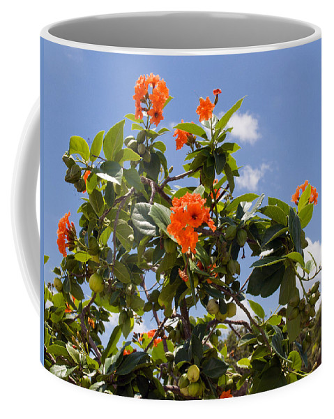 Hibiscus; Rosasinensis; Rosa; Sinensis; Rosa-sinensis; Tree; Bush; Shrub; Plant; Flower; Flowers; Fl Coffee Mug featuring the photograph Orange Hibiscus With Fruit On The Indian River In Florida by Allan Hughes